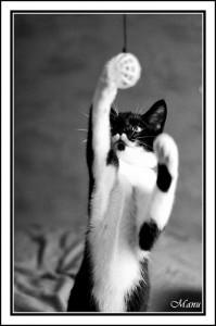 jeu-chat