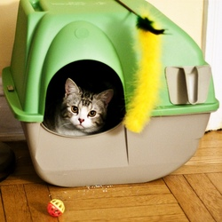 Bacs à litière pour chats