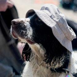 Protégez votre chien du coup de chaleur