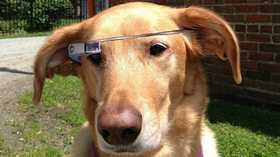 Des lunettes Google Glass pour votre chien?