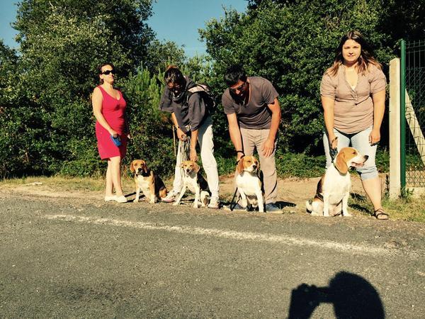 Les Beagles à la recherche d'Holy