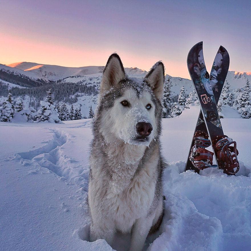 Loki dans la neige