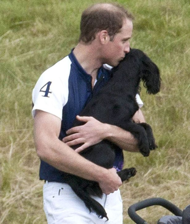Le Prince William et Lupo