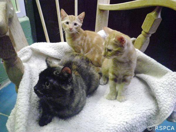 La chatte et ses chatons