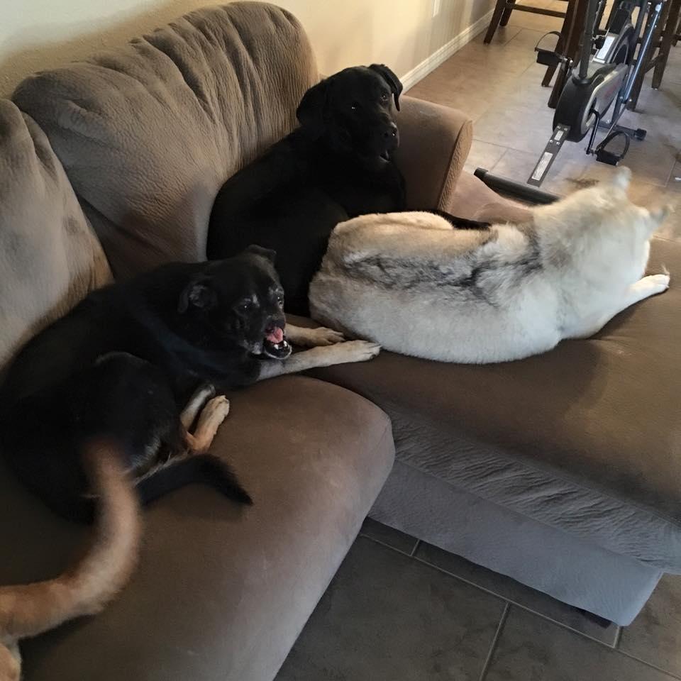 Anubis et les autres chiens