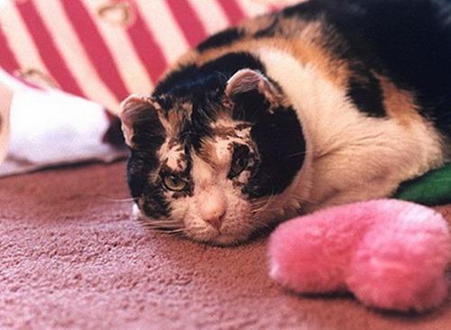 La chatte Scarlett