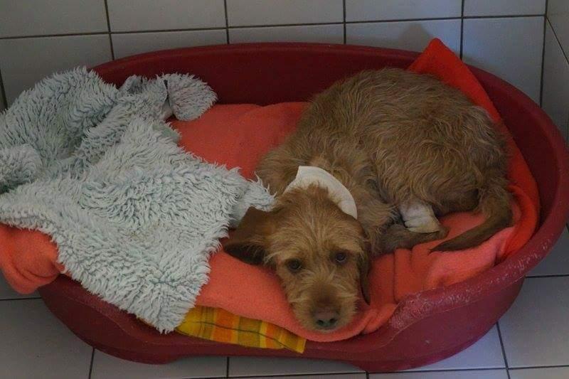 Elliott le chien sauvé photo Laurence Rafadjé du refuge de Flayosc