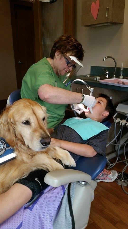 Jojo le Golden Retriever assistant dentiste