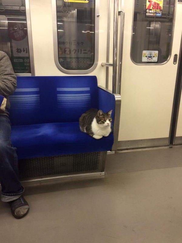 le chat du métro japonais