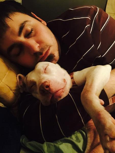 Lilo le Pitbull et Travis