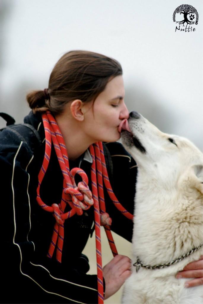 Chien loup condamné