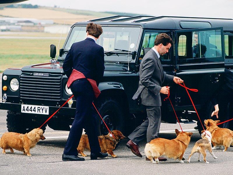 Les corgis de la Reine Elizabeth II
