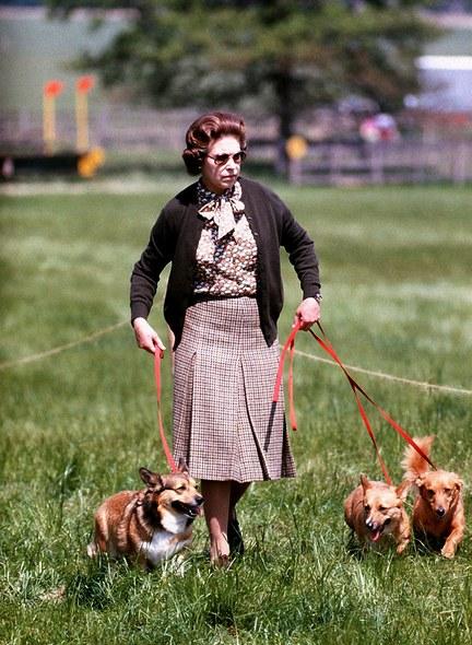 Reine Elizabeth II et ses corgis
