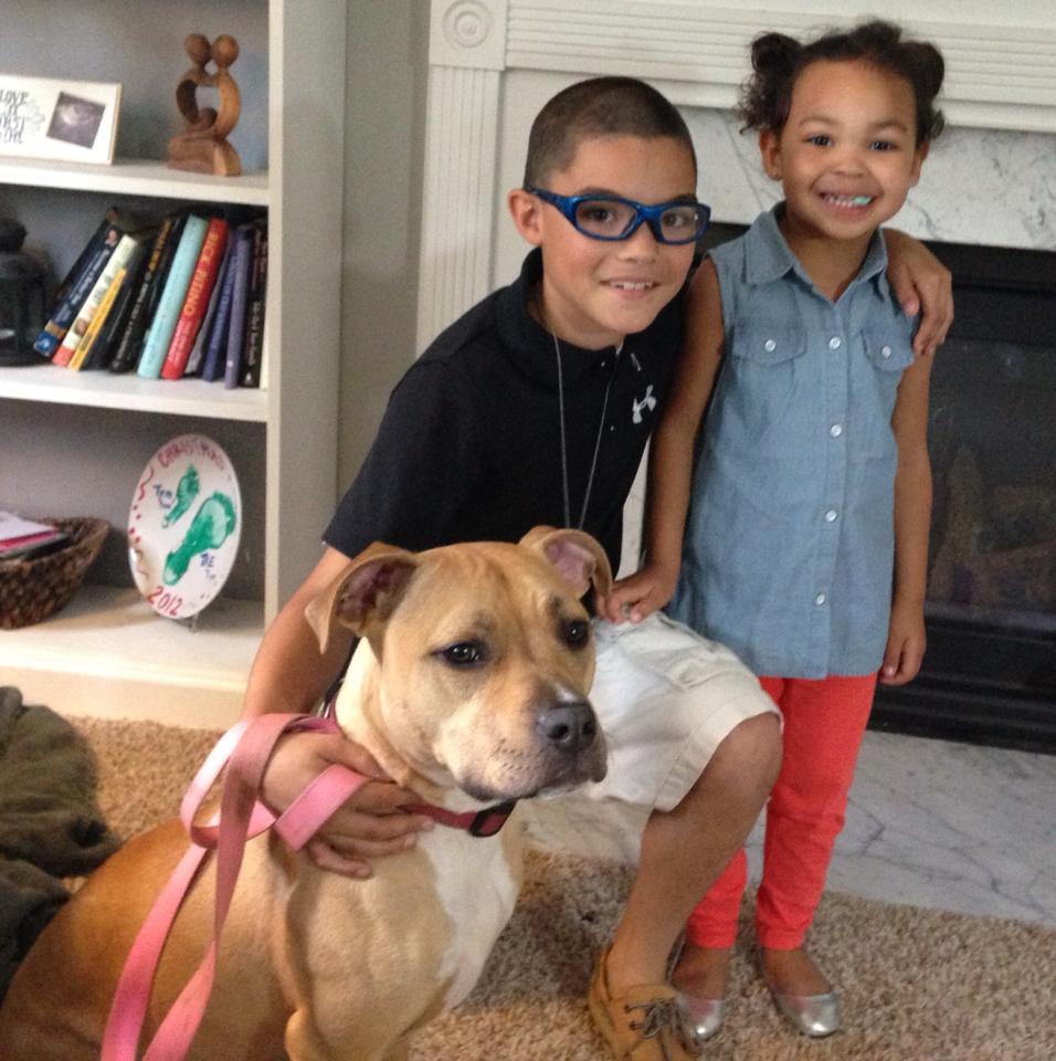 Ember la Pitbull et sa famille