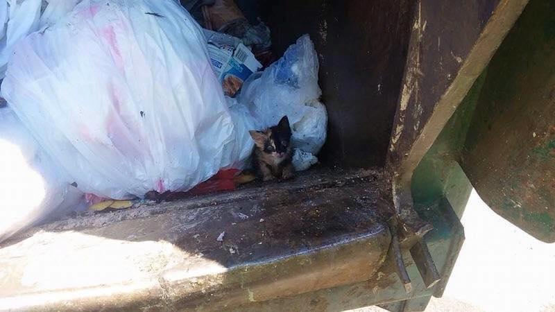 le chaton jeté dans les ordures