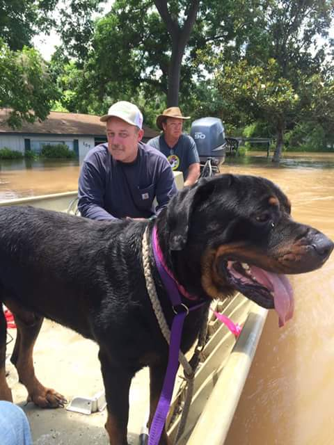 Sauvetage des chiens