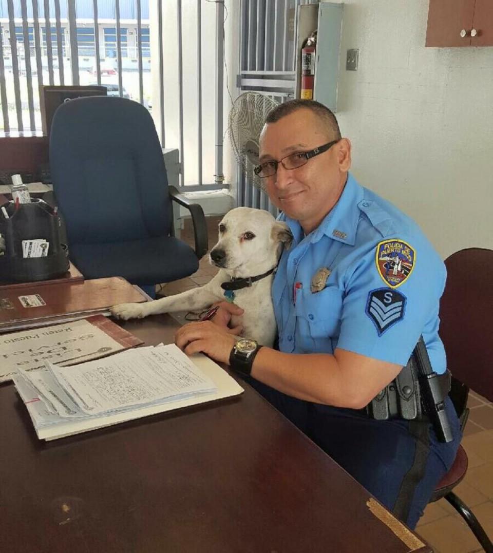 Gorgi le chien adopté par la police