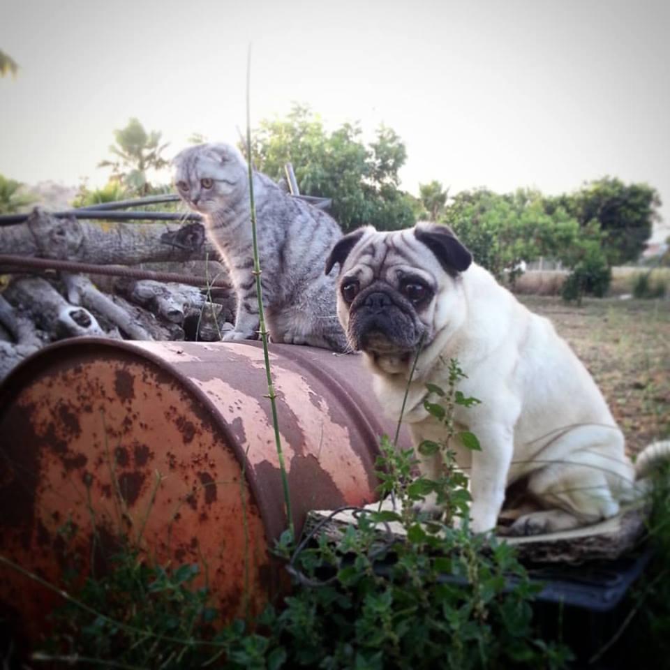 Luigi le chat et Bandito le chien