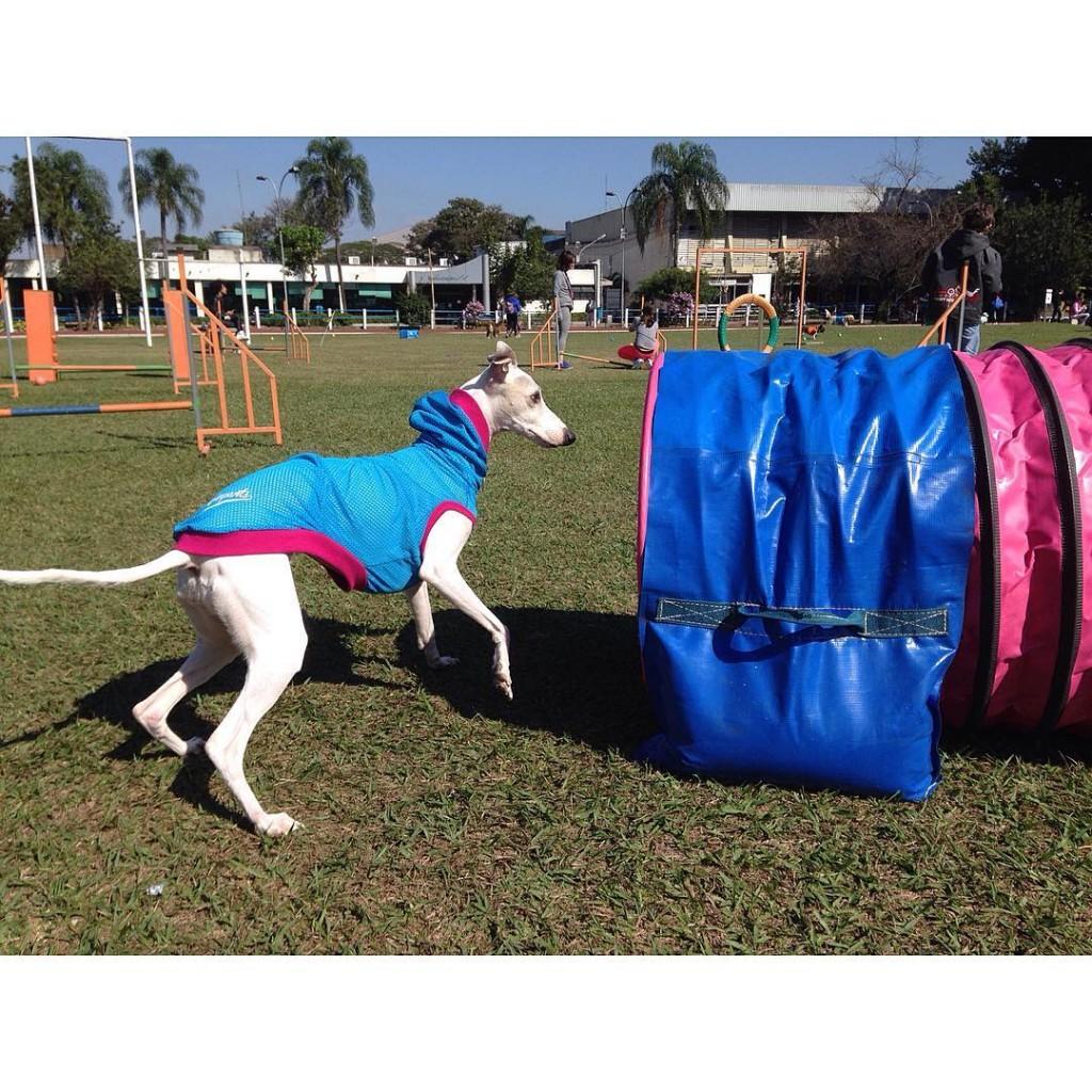 Jeux Olympiques pour chiens