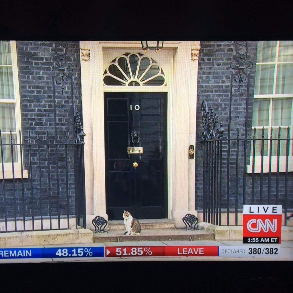 Larry le chat de David Cameron