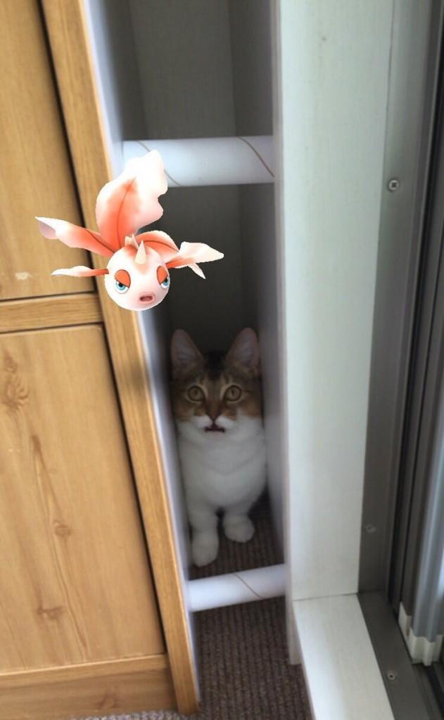 Chat et Pokemon Poissirene