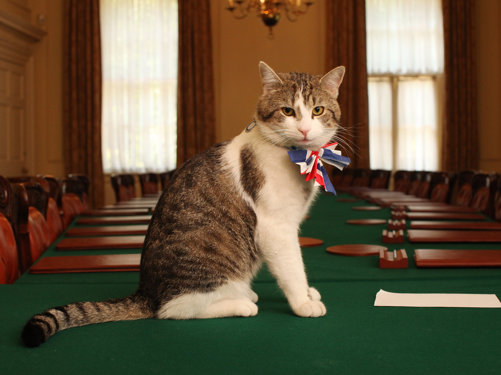 Larry le chat de David Cameron