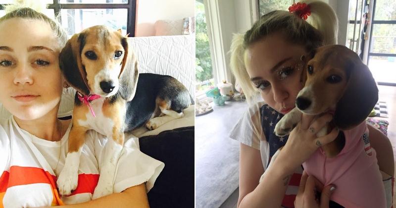 Le Beagle de Miley Cyrus