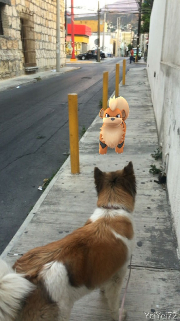 Chien et Pokemon Caninos