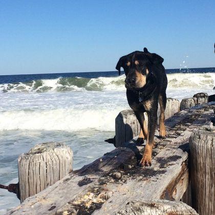 Tobie à la plage