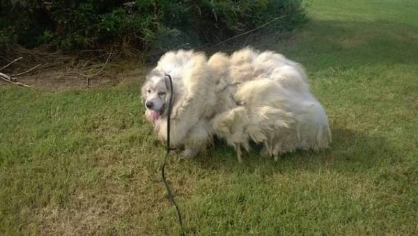 Le chien Lazarus