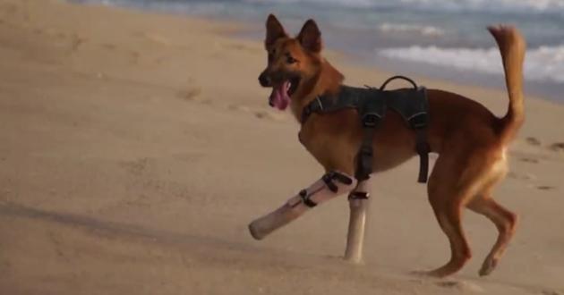 Cola le chien aux prothèses