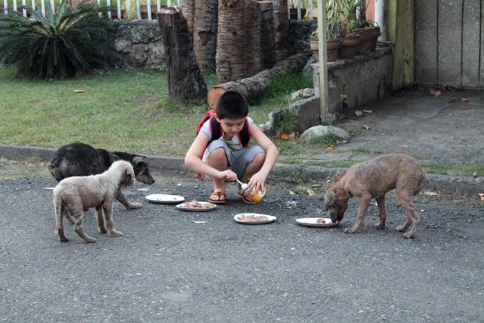 Ken le garçon qui sauve les chiens