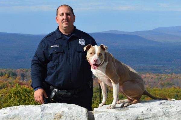 Kiah la pitbull chien-policier