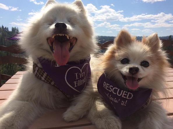 Hoshi et Zen les chiens amis