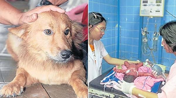 Pui le chien qui a sauvé le bébé