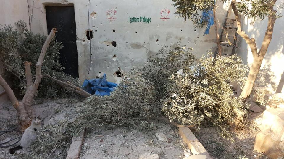 Le sanctuaire des chats d'Alep