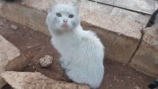 Un beau chat Blanc victime des bombardements