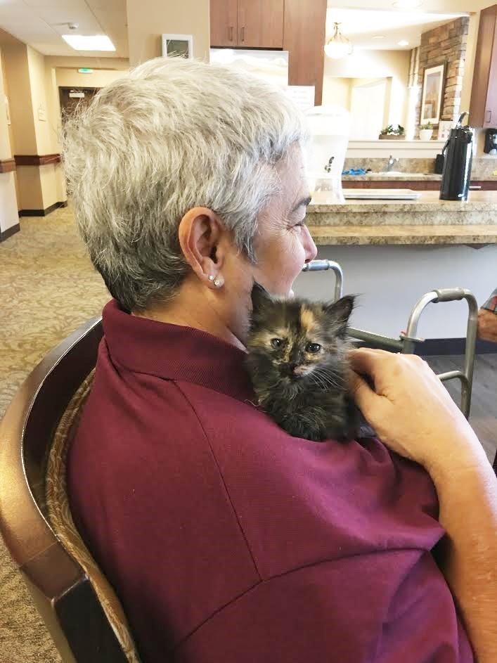 chatons adoptés dans une maison de retraite