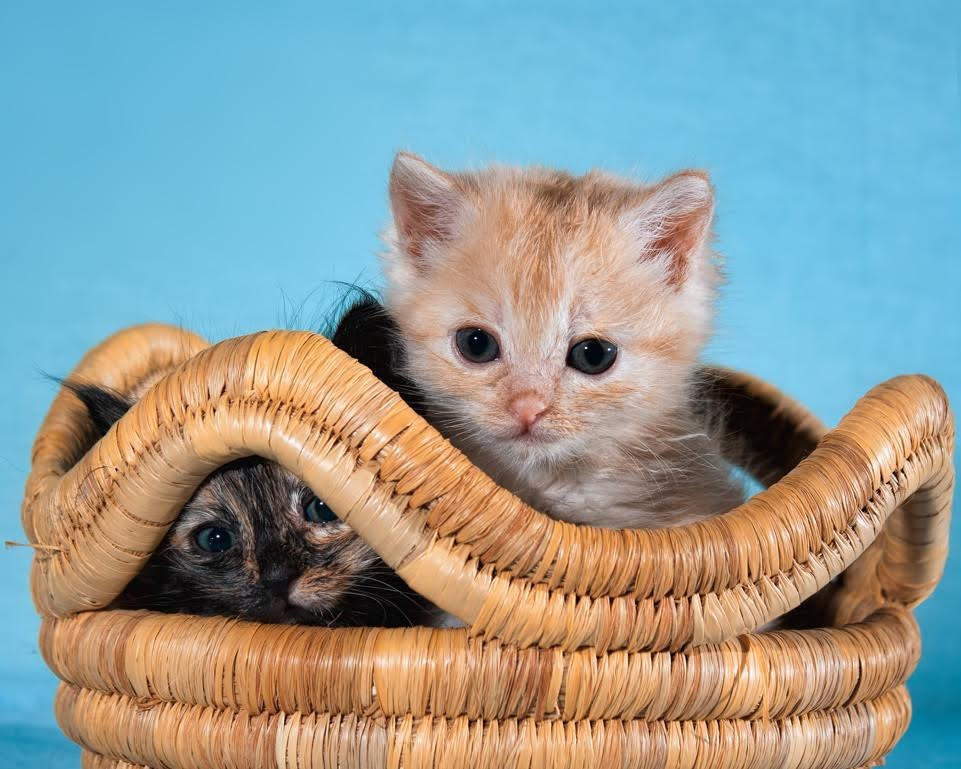 chatons adoptés