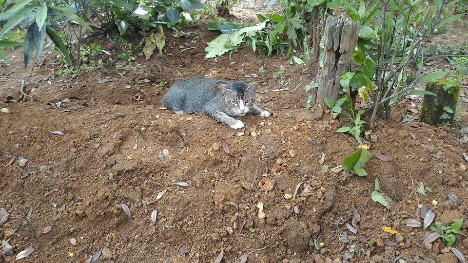 Le chat endeuillé
