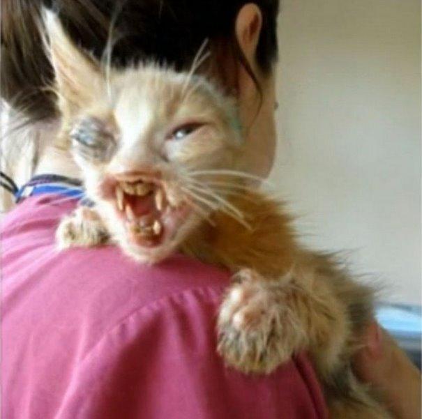 la petite chatte sauvée
