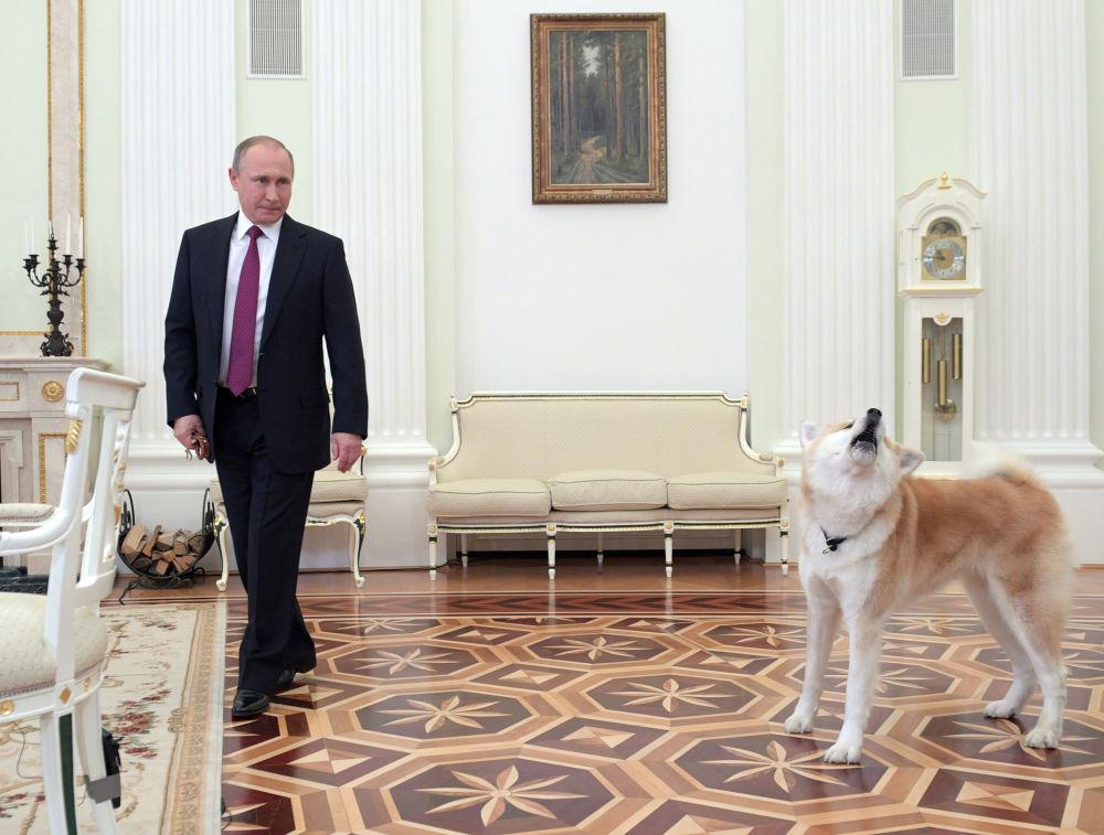 Vladimir Poutine et Yume l'Akita Inu