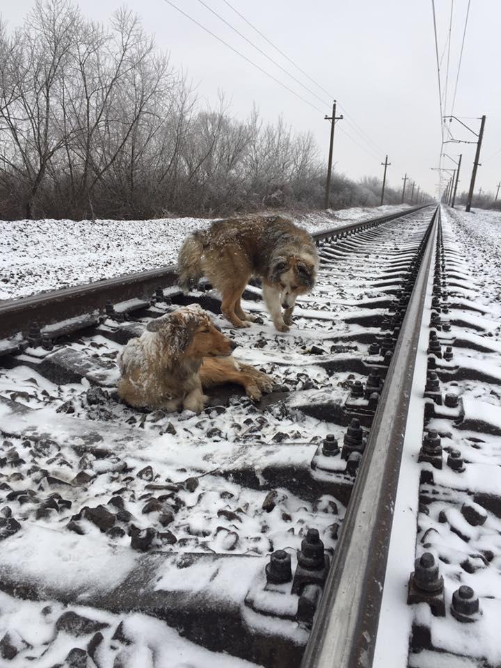 Deux chiens coincés sur les rails