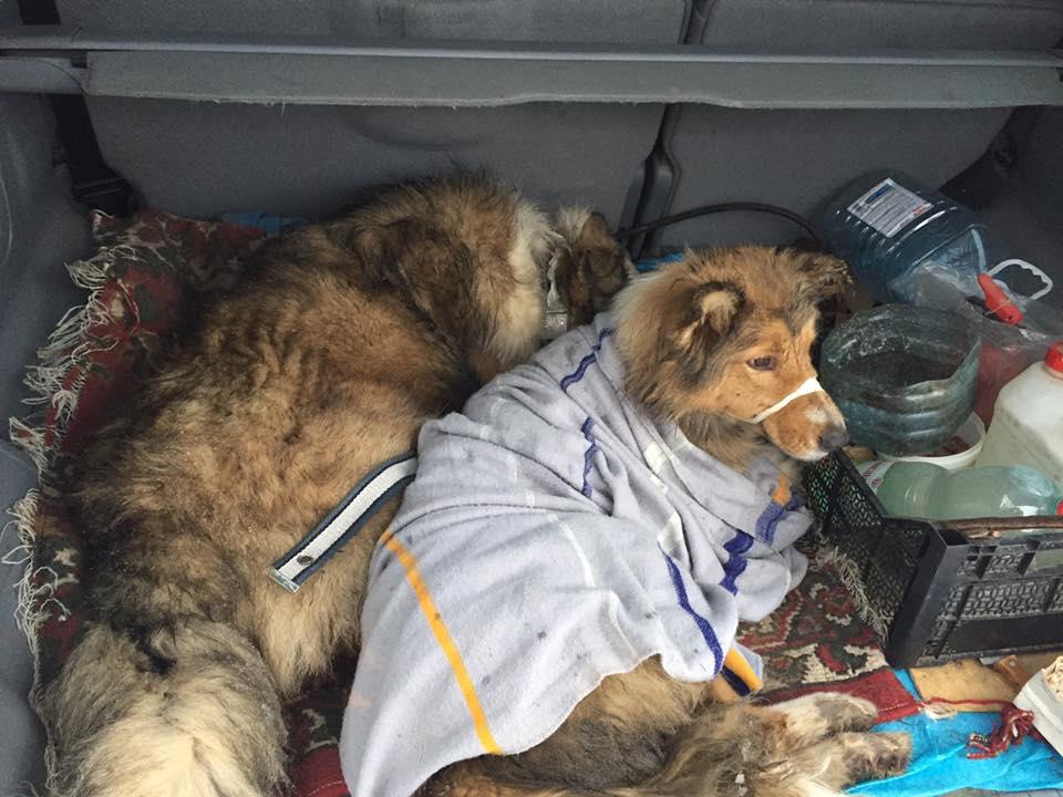 Les deux chiens sauvés