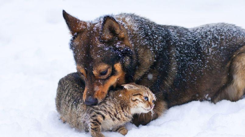 Chien et chat dans la neige