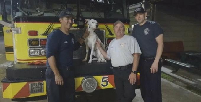 Le dalmatien Chico et les pompiers
