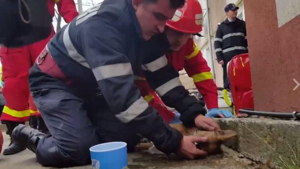 Le pompier sauve le chien