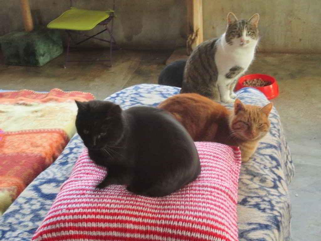 Les chats du refuge