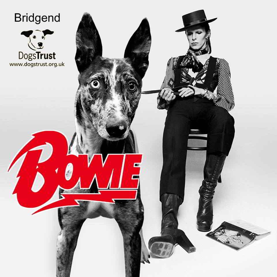 Bowie le chien est adopté !
