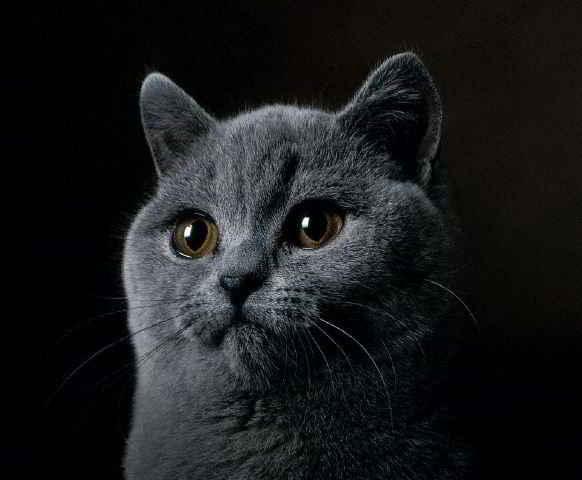 Un chat médium